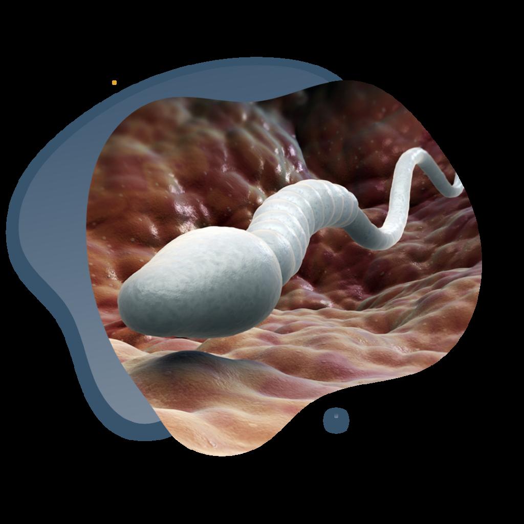 Espermatozoide solo