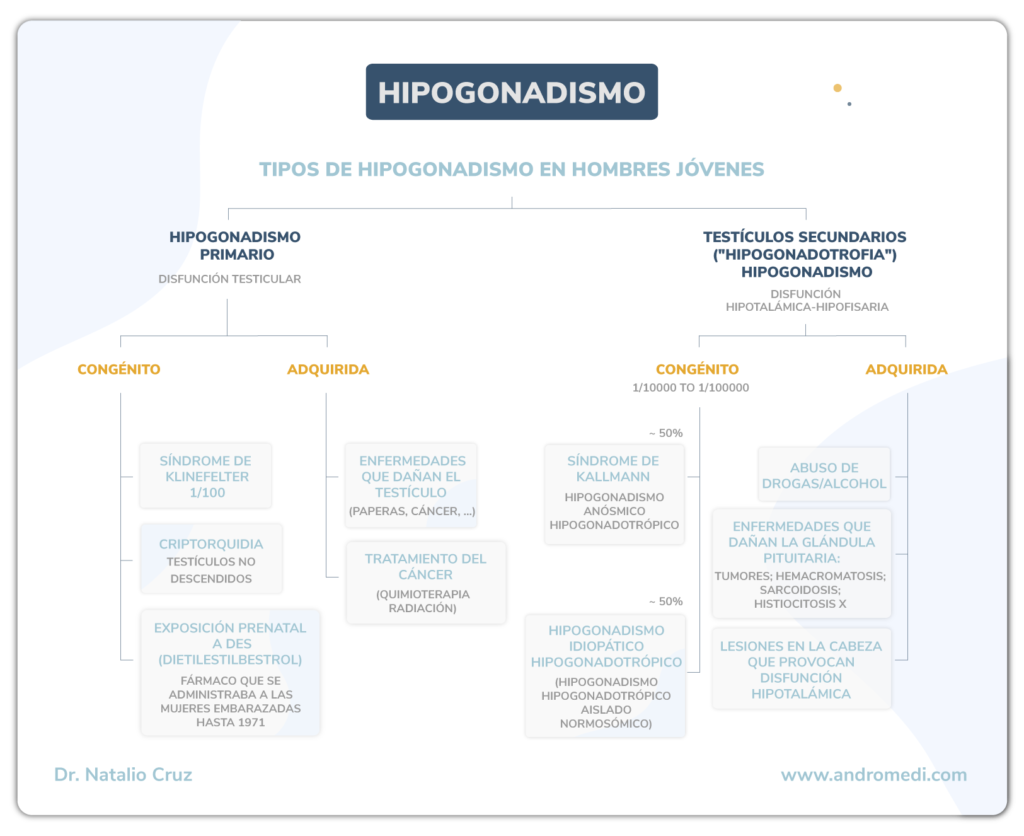 andromedi tipos de hipogonadismo 01