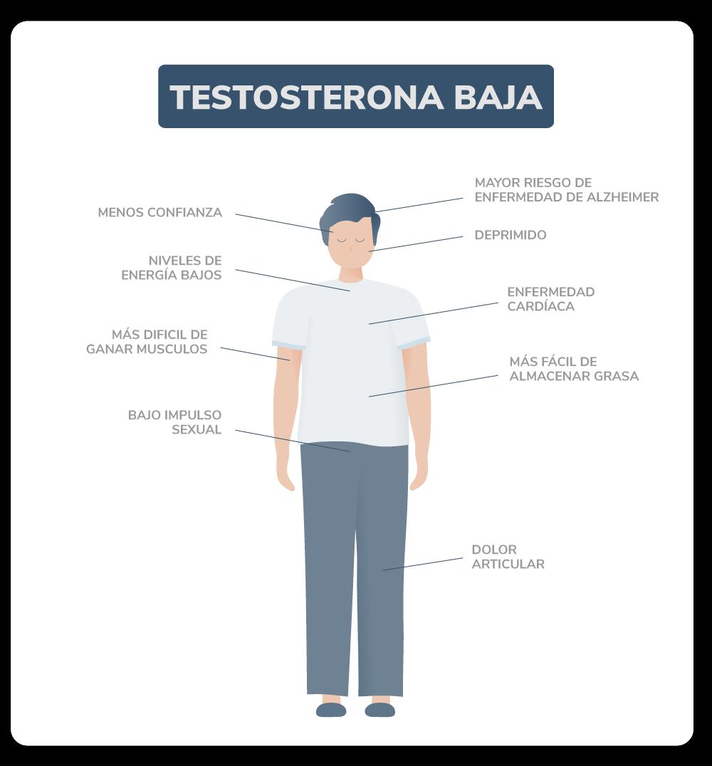 andromedi_testosterona_baja_01.png